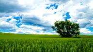 HD-ZEITRAFFER: Schöne Wolkengebilde über Landschaft