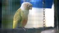 Beautiful colorful lovebird parrot in a cage at public park .