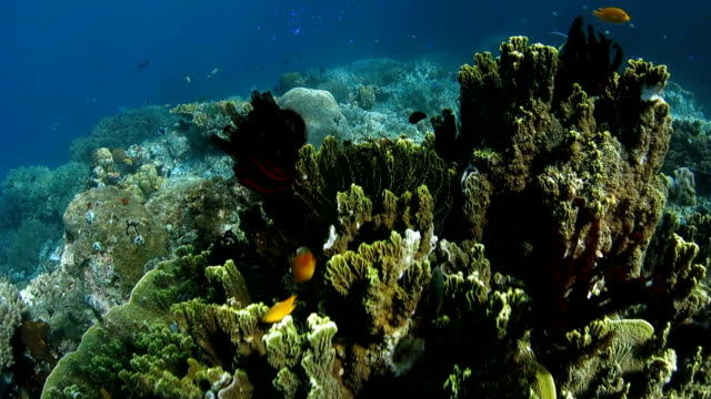 Beautiful coral reef in tropical ocean