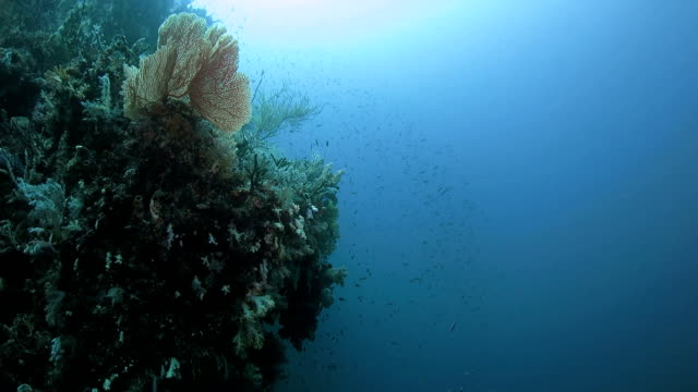 Beautiful coral reef in tropical sea, Indonesia