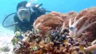 Beautiful Female Scuba Diver Watches Tropical Fish