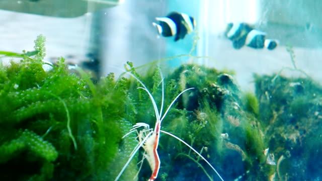 Beautiful Fish and shrimp