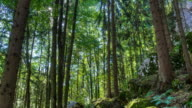 Beautiful Forest - Time Lapse HDR