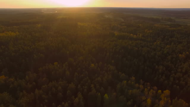 Beautiful forest trees in late sunset