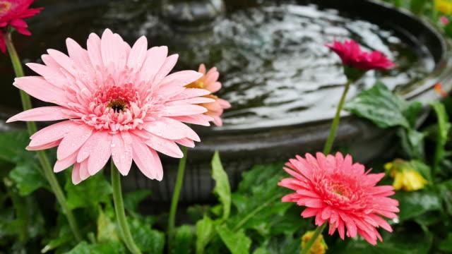 Wunderschöne gerbera-Blume auf den Garten