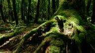 Beautiful green a sea of trees