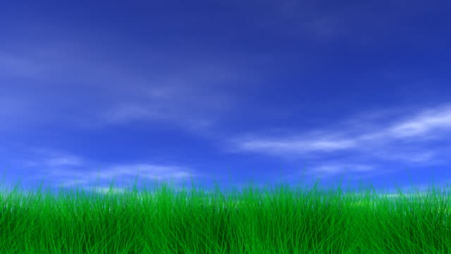 Beautiful Green Grass & Blue Sky