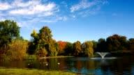 Bellissimo lago con waterfowl