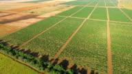 Beautiful landscape of green vineyards, aerial video