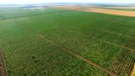 Beautiful landscape of green vineyards in summer, aerial video