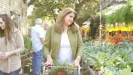 Beautiful mature Hispanic woman pushes shopping cart down aisle in plant nursery or farmer's market