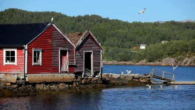 Beautiful Norway, bouthouses and seagulls HD