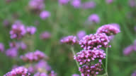 Beautiful pink bunch flowers on green grass