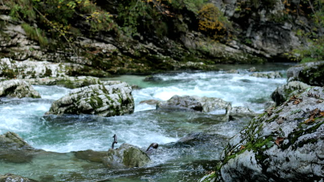 Beautiful Scenics of River Radovna in Vintgar Gorge