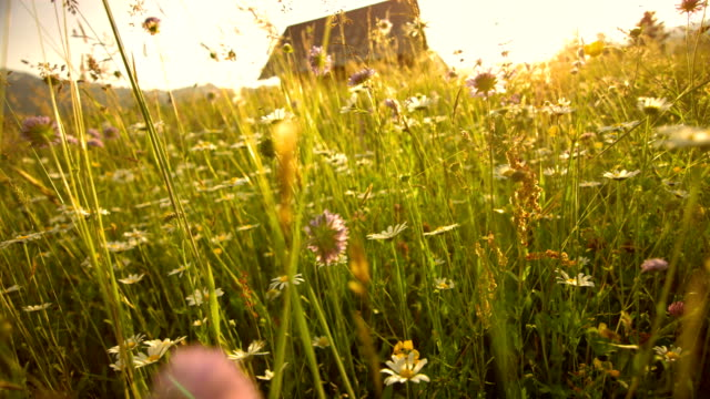 SLO MO Beautiful Spring Meadow