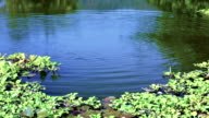 Beautiful summer landscape on the lake