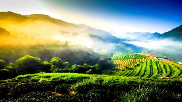 Beautiful sunshine at misty morning mountains at north thailand timelapse