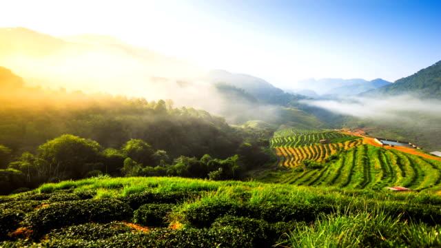 Beautiful sunshine at misty morning mountains north thailand