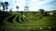 Beautiful tea plantation