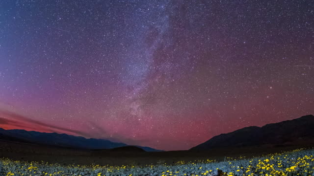 Beautiful time lapse shot showing the stars moving over a field of flowers in Death Valley, California.