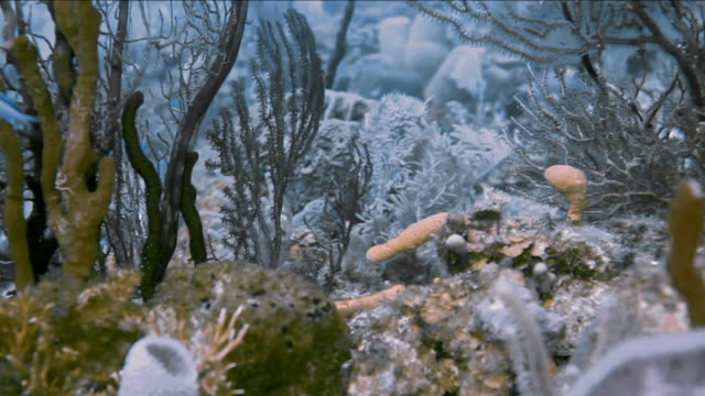 'Beautiful tracking shot of coral with blue fish, Gulf of Mexico'