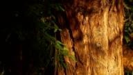 Beautiful tree bark