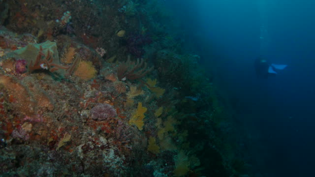 Beautiful undersea reef with soft coral