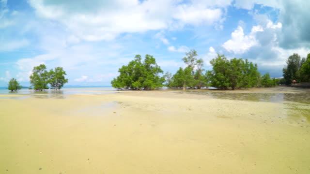 Beautiful view mangroves forest beach