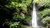 beautiful waterfall from forest