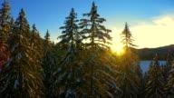 Schöne Winter-Wald bei Sonnenuntergang