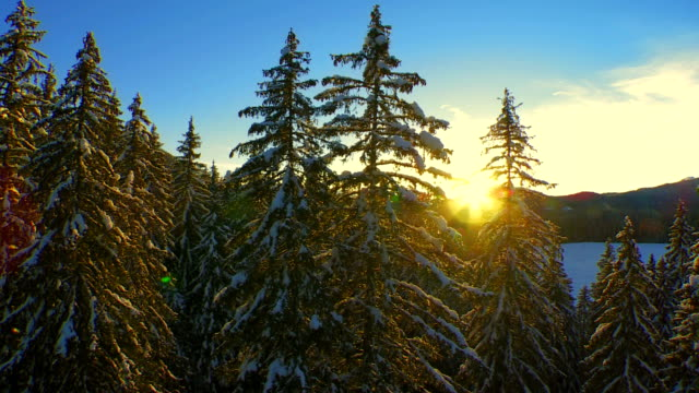 Beautiful Winter Forest At Sunset