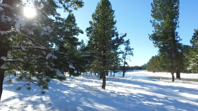 Beautiful winter landscape on the river with tall trees