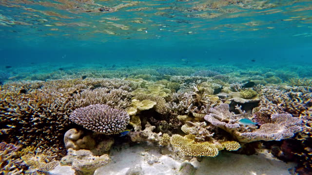Beauty In Nature on coral reef - Maldives