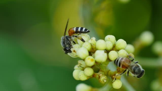 Bee feeding on flower.