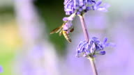 Bee Insect