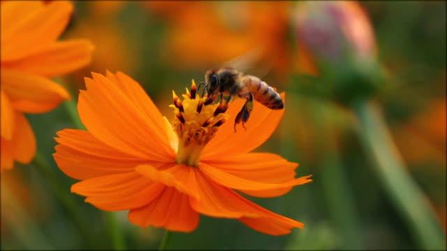 Bee landing on flower slow motion.