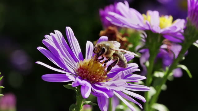 SLOW MOTION: Bee on Flower