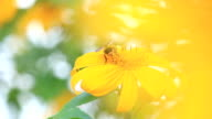 Bee on the yellow flower in garden