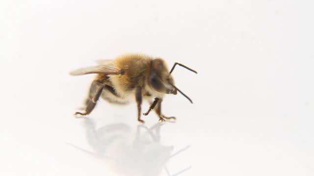 Bee posing