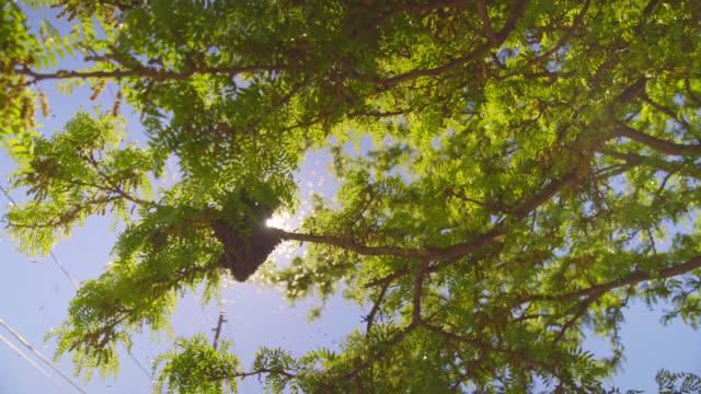 Ein Bienenschwarm sammelt in einem Baum - breit