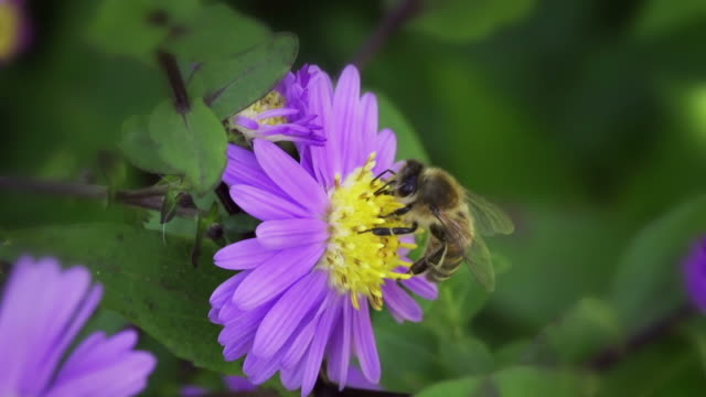 SLOW MOTION: Bee