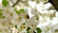 bee wind