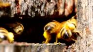 Beehive entance CU