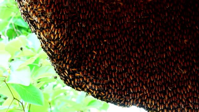 Bienenstock mit wilden bees