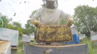 Beekeeper beekeeping the beehive