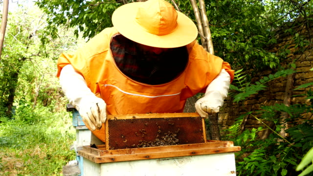 4K Beekeeper is working with bees and beehives on the apiary