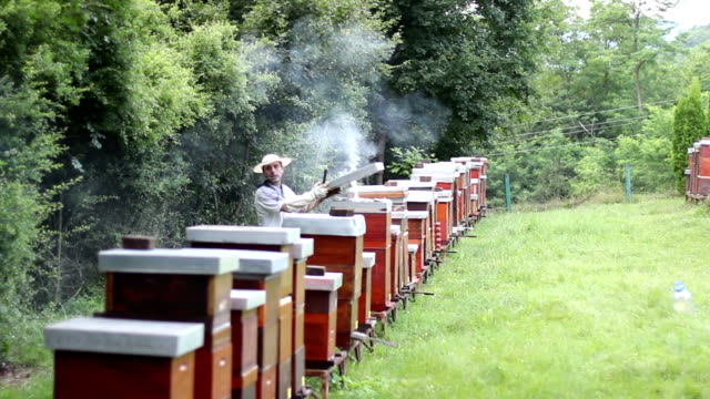 Beekeeper works at his apiary