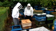 beehives and beekeeper ENGLAND Wiltshire Swindon EXT Beehives in field/ various shots of beekeeper Ron Hoskins tending to beehives as accompanied by...