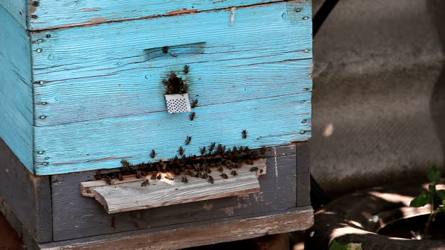 Bees during hard job