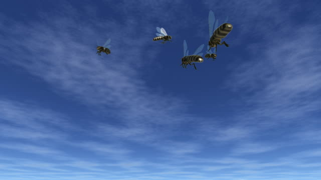 Bees flying under blue sky